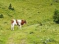 Hindernis auf dem Wanderweg zur Baldenweger Hütte - panoramio.jpg