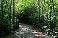 Homestead Trail - panoramio.jpg