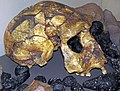Homo erectus (fossil hominid skull) & indochinite tektites (Pleistocene; southeastern Asia) 3 (45586418921).jpg