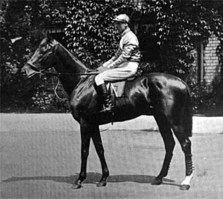 St. Amant (horse)