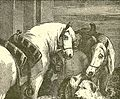 Horses and Dogs Drawing.jpg