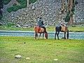 Horses in mahodand.jpg