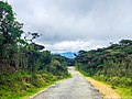 Horton Plains Green 06.jpg