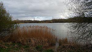 Berkshire, Buckinghamshire and Oxfordshire Wildlife Trust - Hosehill Lake - March 2017
