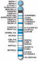 Human chromosome 15 with ASD genes from IJMS-16-06464.png