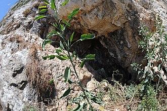 Ibex Cave - Image: Ibex Cave 2