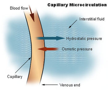 Interstitial fluid - Wikipedia, the free encyclopedia