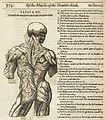 Illustration of human torso from Crooke 'Mikrokosmographia' Wellcome L0063031.jpg