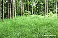 Im Wald - panoramio (5).jpg