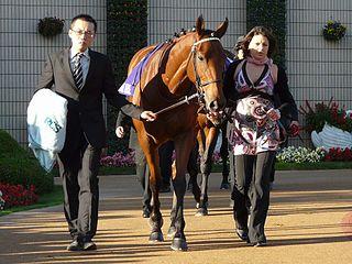 Immortal Verse Irish-bred Thoroughbred racehorse