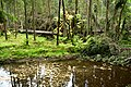 Impassable forest areas in the Valdai National Park.jpg