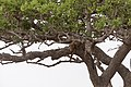 Impressions of Serengeti (36).jpg