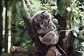 Indianapolis Zoo, Indianapolis, United States (Unsplash).jpg
