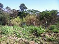 Itupeva - SP - panoramio (1075).jpg