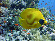 Renaissance Sharm El Sheikh Golden View Beach Resort Tripadvisor