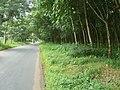Jalan dan kebun karet - panoramio.jpg