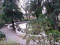 Jardín de Monforte 95.jpg