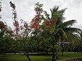 Jardins de Paofai - Papeete - panoramio (6).jpg