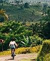 Jatiluwih UNESCO Bali landscape cycling.jpg