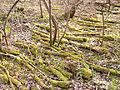 Jyväskylä - moss2.jpg