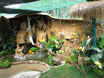 English: Part of parrots world in KL bird park
