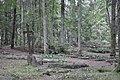 Kannenieku kapi, Baldones pagasts, Baldones novads, Latvia - panoramio (2).jpg
