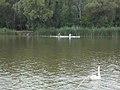 Kayaking, Ráckeve-Soroksár Danube, 2017 Soroksár.jpg