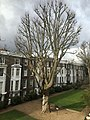 Kensington, London, UK - panoramio (25).jpg
