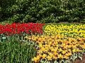 Keukenhof floranta 13.jpg