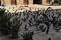 Khanqah Baybars Al Jashankir, photo by Hatem Moushir 27.jpg