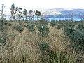 Kilcreggan- Barremman, Gare Loch Forestry Track - geograph.org.uk - 338819.jpg