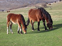 Konji-Zeljko.JPG