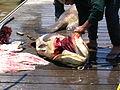 Kourou port fishermen mérou.jpg