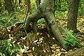 LRSP Cool looking tree.jpg