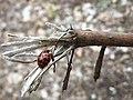Ladybug on Stick.jpg