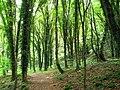 Lagodekhi Managed Reserve (Photo by Peretz Partensky, 2009) (2).jpg