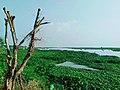 Laguna Lake from Angono, Rizal (6).jpg