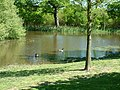 Lake near Hatch Farm, Thorndon Country Park, Brentwood - geograph.org.uk - 420859.jpg