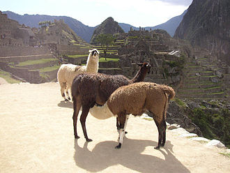 The Amazing Race 7 - In the first Detour of The Amazing Race 7, teams had a choice to rope a llama in Huambutio for transfer to a nearby pen (pictured on Machu Picchu).