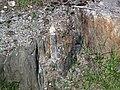 Lamprophyre dike & hornfels & country rock (Archean; Route 17 roadcut southeast of Princess Lake & north of Wawa, Ontario, Canada) 6 (48278247867).jpg
