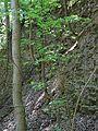 Landschaftsschutzgebiet Gestorfer Lößhügel - Steinbruch (7).JPG