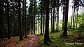 Las (Góry Kaczawskie) - Grzegorz Saczyło.jpg