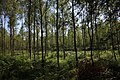 Lasy Łączańskie - panoramio (8).jpg