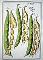 LeBerryais Haricots planche 08.jpg