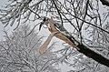 Lebenswertes chemnitz winter stadtpark schneebruch 1.jpg