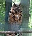 Leipzig Wildpark Eurasian eagle-owl 01.JPG
