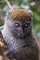 Lemurien 2848a.JPG