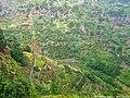 Levadas do Estreito de Câmara de Lobos - Ilha da Madeira - Portugal (4463895365).jpg