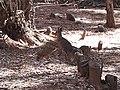 Liebre patagonia Castillo de las Guardas 1.jpg