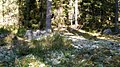 Light and shadows in the forest - panoramio.jpg
